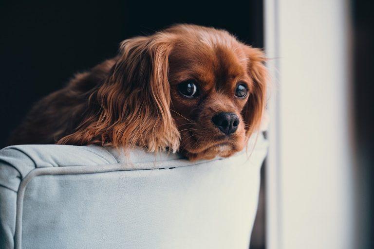 Z miłości do czworonogów – akcesoria dla psów i kotów